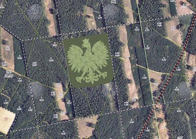 Lipusz. Gigantyczny orzeł z drzew powstanie w środku lasu [wizualizacja]