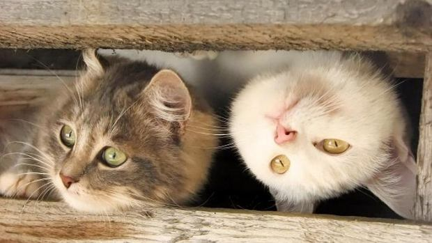 Zdjęcie numer 0 w galerii - Kotów nigdy zbyt dużo. A te są naprawdę przepiękne - idealne na dziś