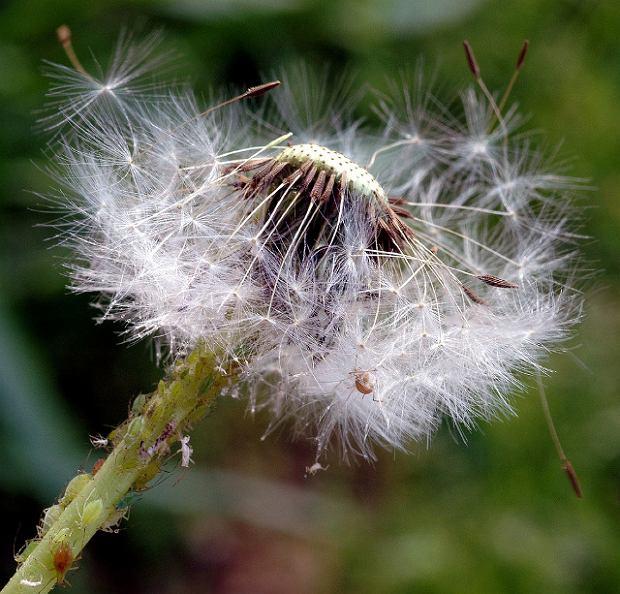 Alergie - podstawowe fakty