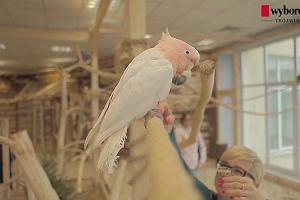 Pierwsza papugarnia w Trójmieście. 'To niezwykle mądre i towarzyskie ptaki'