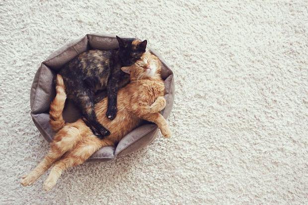 Dom, poduszka i ona. Czy to fantazja erotyczna, a może tylko samotność? #JakKochać