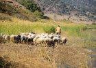 Adam Wajrak: Pochwała życia wśród przyrody