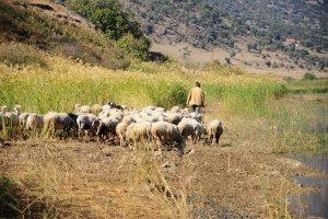 Adam Wajrak: Pochwa�a �ycia w�r�d przyrody