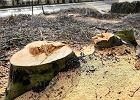 Myśliwi się mobilizują, by bronić Szyszki. Ekolodzy: Kupczą drzewami dla własnego interesu