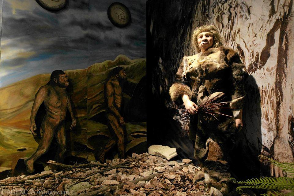 Figura Nendertalczyka w Centrum Neandertalczyka ' - w sąsiedztwie Jaskini Raj