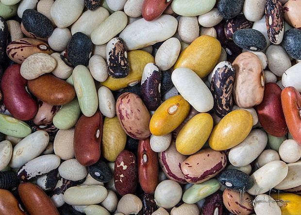 Fasola - bogactwo białka. Wartości odżywcze i właściwości lecznicze fasoli