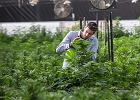 Marihuana w kibucu, czyli jak się zmienia Izrael