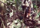 """Ruiny tajemniczego miasta """"Małpiego Boga"""" odnaleziono w dżungli Hondurasu"""