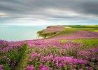 """Wyróżnienie w kategorii """"pejzaż klasyczny"""" - fot. Nick Hanson - n/z: """"Morze różu"""", Buckton Cliffs, East Yorkshire,  Anglia"""