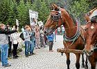 Zamieszanie wokół koni na drodze do Morskiego Oka wywołali producenci meleksów?