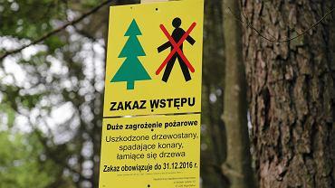 Puszcza Białowieska. Tablice informujące o zakazie wstępu do lasu