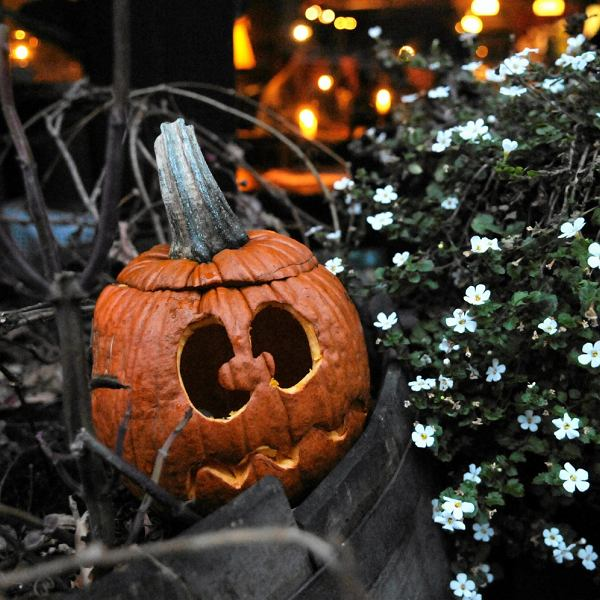 Halloween w Pomponie