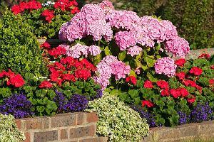 Jak urządzić ogród kwiatowy?