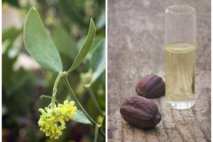 Olej jojoba - panaceum na problemy skórne