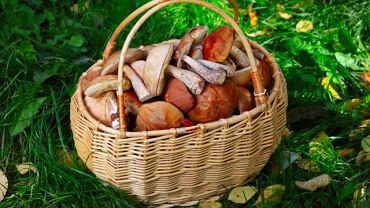 Masz pewność, że w tym koszyku nie ma grzybów trujących?