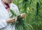 NFZ zapłaci za medyczną marihuanę