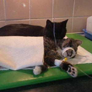 Wyzdrowia� i... zacz�� opiekowa� si� innymi  - niezwyk�y kot-piel�gniarz