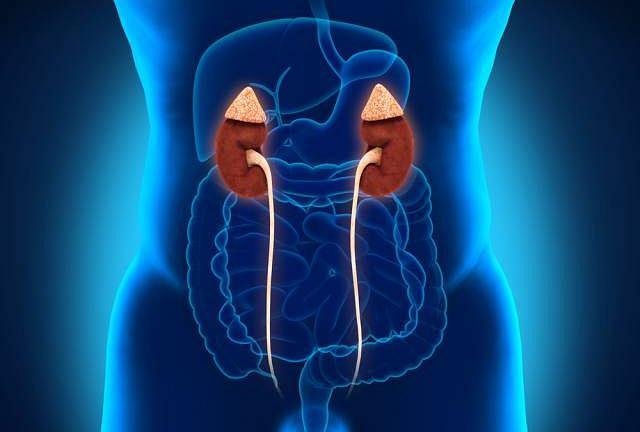 Badanie GFR służy ocenie pracy oraz postępu ewentualnych zmian chorobowych w nerkach