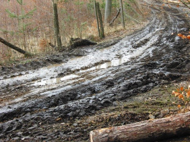 Drogi le�ne w fatalnym stanie. Park krajobrazowy czy fabryka drewna?