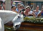 Koń wziął udział w pogrzebie właściciela. Zachowanie zwierzęcia... wzruszające! [WIDEO]