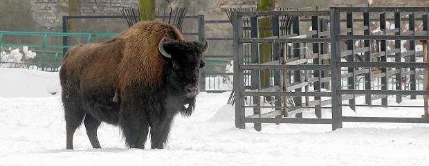 B��d, j�zyk elficki, polowanie na bizony - najdziwniejsze przedmioty uniwersyteckie