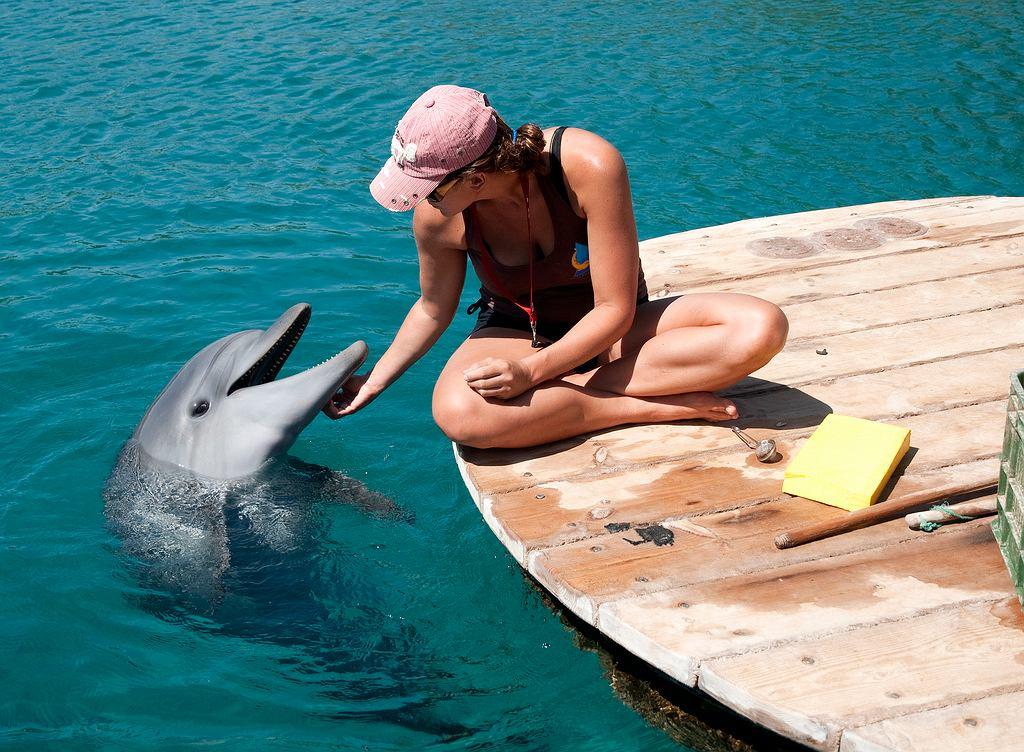 Rafa Delfinów w Ejlacie