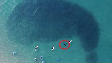 Gigantyczny cień na to.. ławica tysięcy ryb