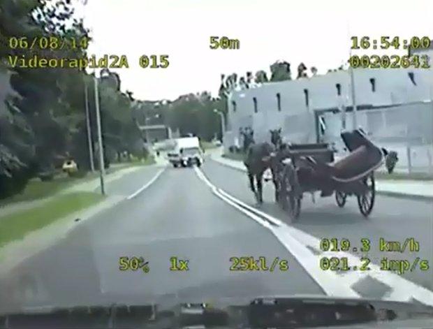 Policjanci �cigali radiowozem... zaprz�g konny [WIDEO]