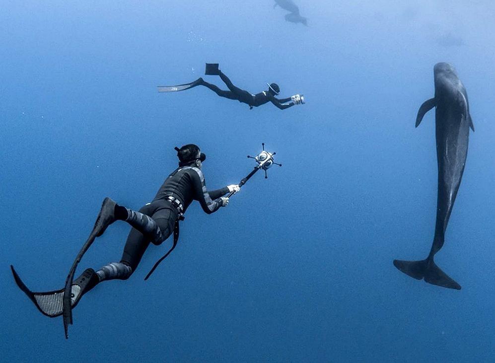Kadr z filmu 'Człowiek delfin' / Materiały prasowe