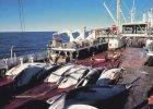 Japo�ski statek do po�owu wieloryb�w