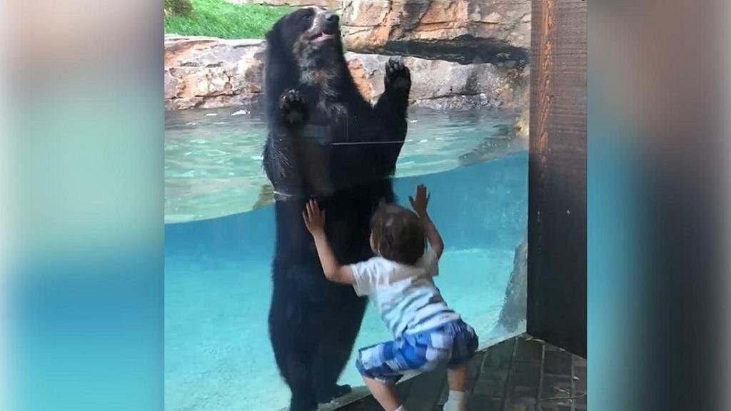 Skaczący niedźwiedź