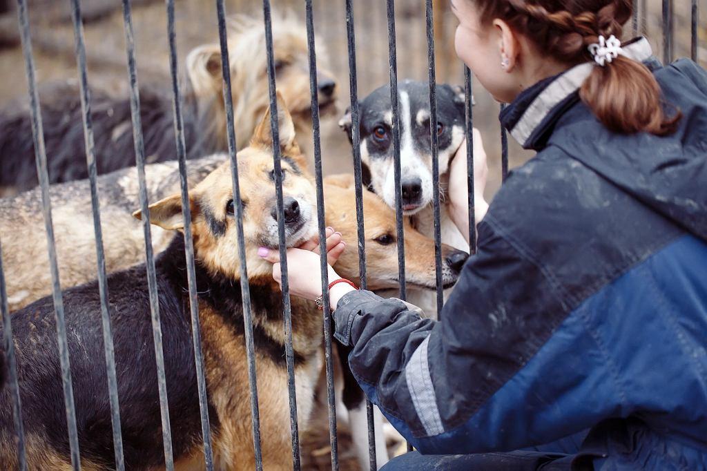 W schronisku pełno jest psów, które wciąż czekają na swojego człowieka.