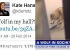 Wkr�ci� wszystkich! Po hotelowym korytarzu w Soczi przechadza� si� wilk, a tak naprawd�...