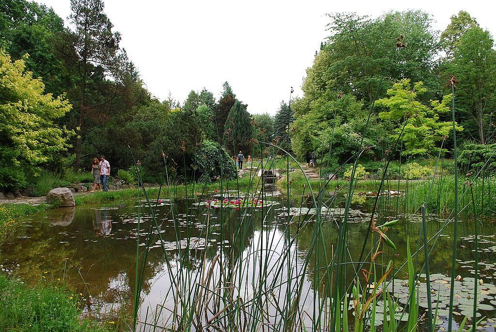 Arboretum w Rogowie / fot. Polimerek, Wikimedia Commons
