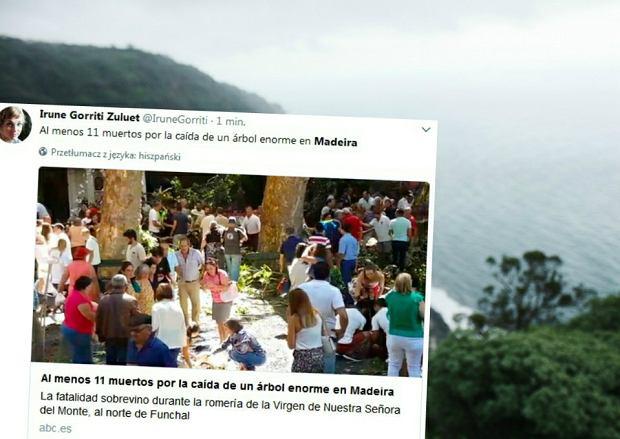 200-letnie drzewo runęło na pielgrzymów w Largo da Fonte. Co najmniej 11 osób nie żyje