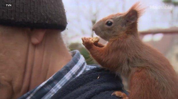 Trzy lata temu znalazł małą wiewiórkę. Dziś pan Tadeusz i Pitek są najlepszymi przyjaciółmi