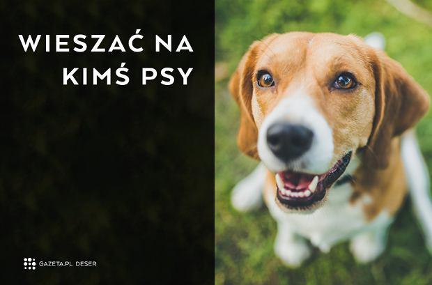 Skąd się wzięło tych 20 polskich powiedzeń? - Wieszać na kimś psy