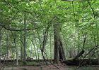 Wiedza cenniejsza ni� kubiki drewna - polemika A.Wajraka