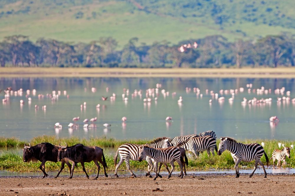 Afryka. Tanzania - różowe flamingi w Ngorongoro / fot. Shutterstock