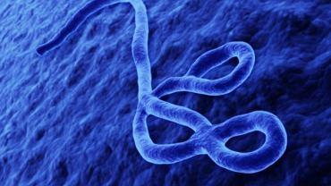 Wirusem eboli można się zarazić przez kontakt z płynami ustrojowymi lub używanie brudnych narzędzi