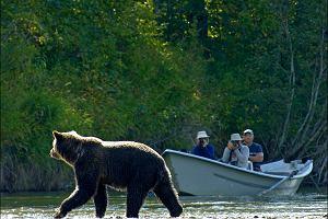Kanada - Grizzly Safaris, czyli spotkanie z misiem [EKSKLUZYWNE WYPRAWY]