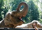 Nawo�uj� do bojkotowania zoo. Bo zwierz�ta si� m�cz�