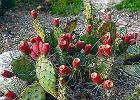 Urz�dzamy stanowisko dla kaktus�w