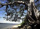 Trzy dni nad Orinoko - List z delty
