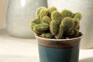 Kaktusy dla każdego