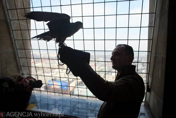 26.03.2009 WARSZAWA - PALAC KULTURY I NAUKI ( PKIN ) - TARAS WIDOKOWY - N/Z BARTLOMIEJ PROKOP , SOKOL