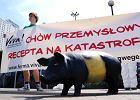 Wegetarianie kontra świńska grypa