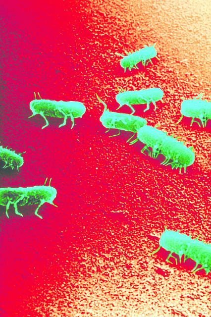 Bakterie salmonelli gin� dopiero wtedy, gdy potrzymamy je w temperaturze 60 stopni przez 12 minut