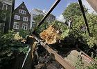 Holandia: Wichura złamała kasztanowiec Anny Frank