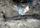 Znale�li groby ofiar rozstrzelanych przez komunist�w?